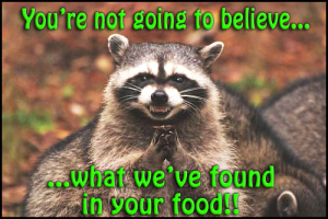 vs-raccoon-foundinfood
